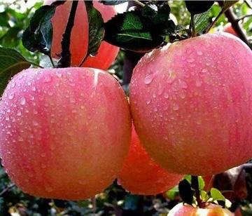 每天一颗苹果 对人体有8个好处